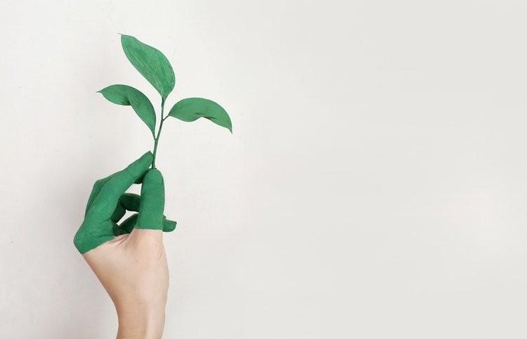 verde-medioambiente-salud-retail-marketing